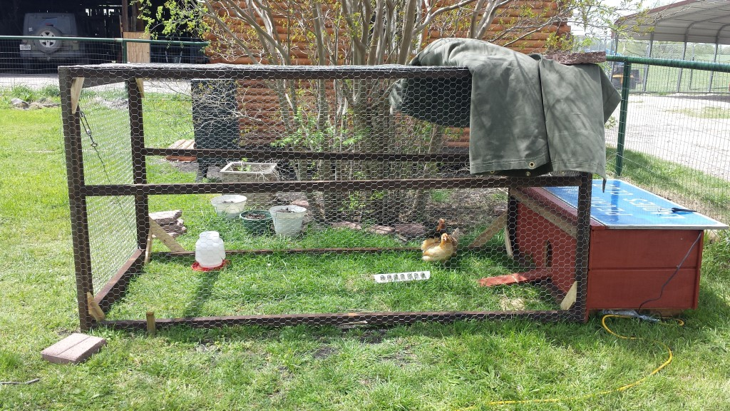 This is our little chicken coop I built.